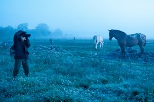 fehéregyensúly a kék lovakért