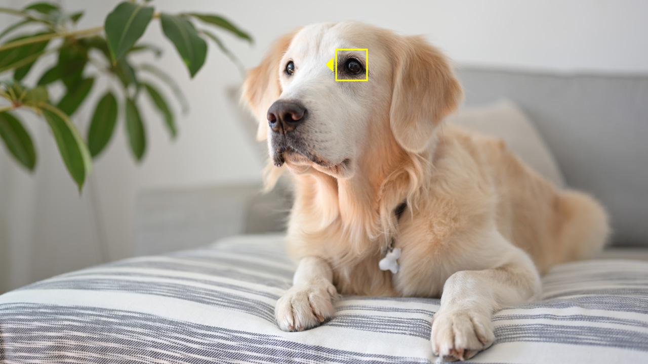 Állat ez a szemfelismerés